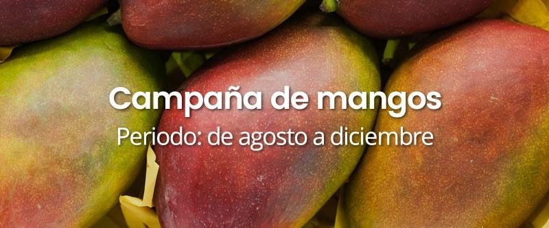 campana-mangos INICIO